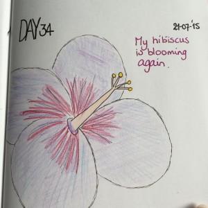 Inge hibiscus