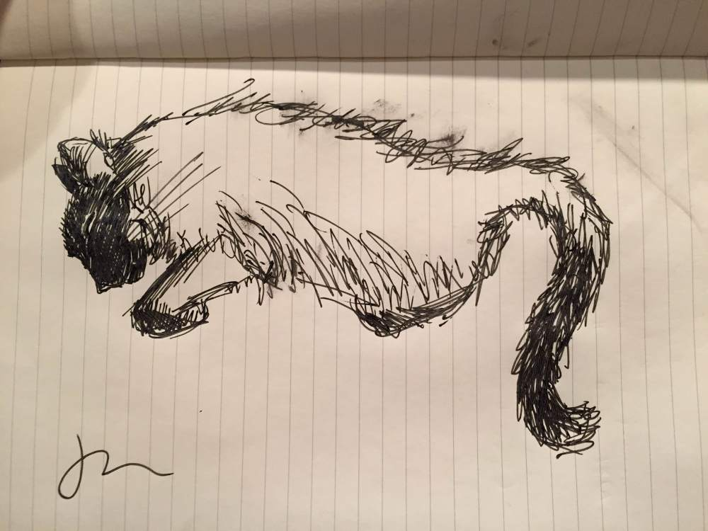 A rough pen sketch of a black cat, the body is not filled in.